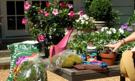 Container Gardens for Beautiful Outdoor Style